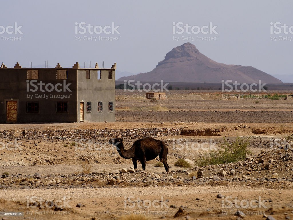 House and Camel in Draa Valley stock photo