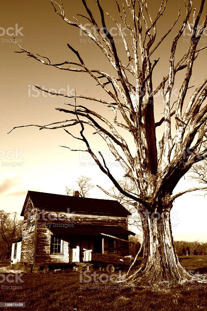 House and Large Tree royalty-free stock photo