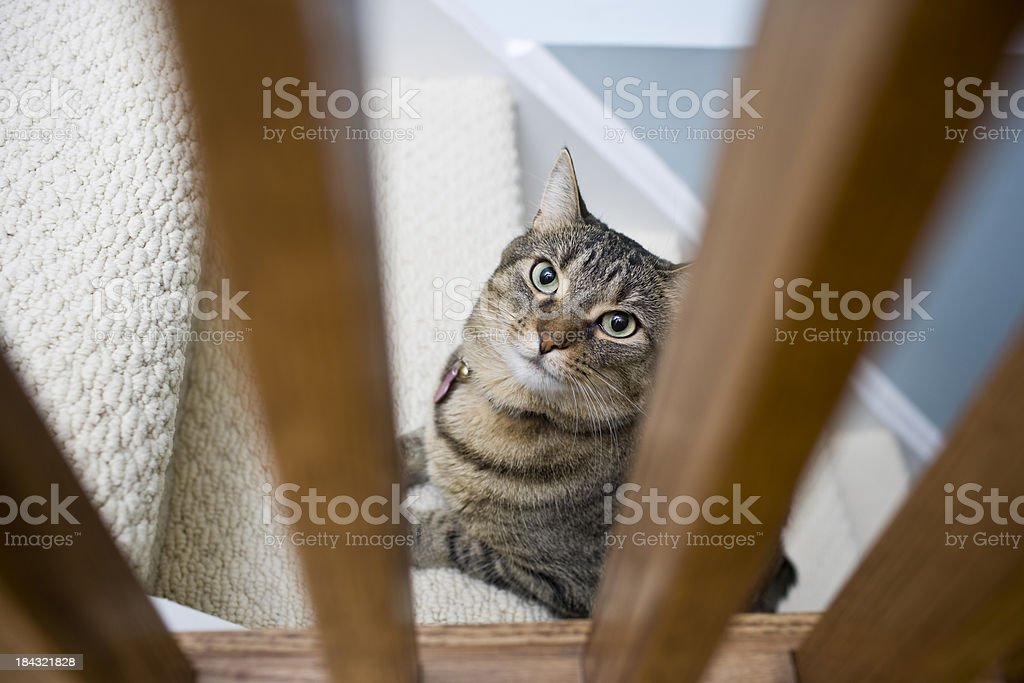 House Cat royalty-free stock photo
