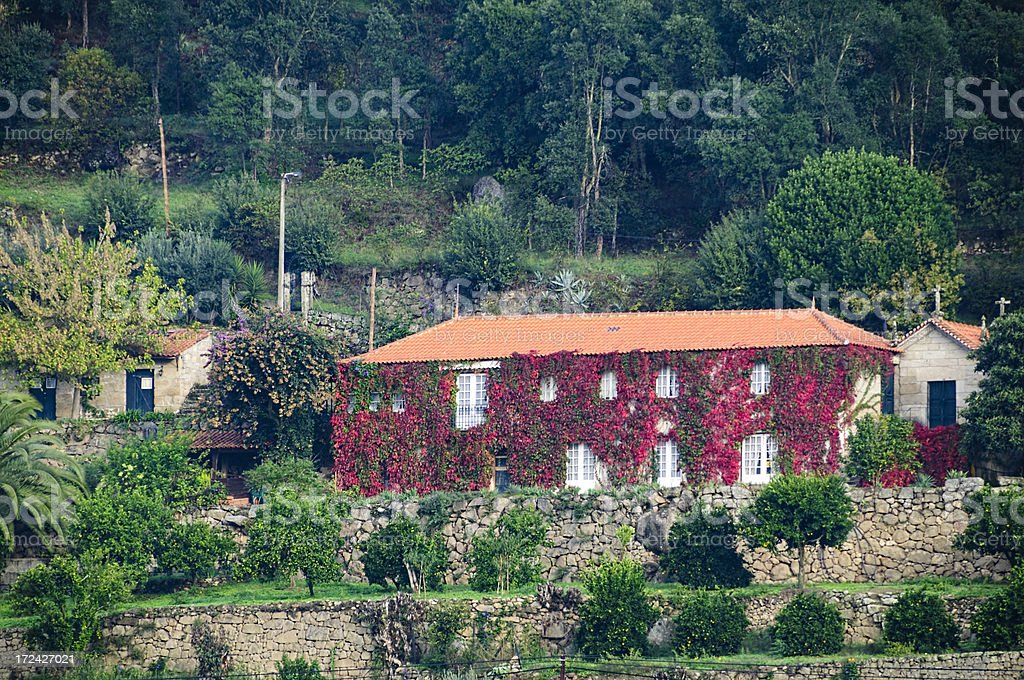 House covered with red ivy in autumn. royalty-free stock photo