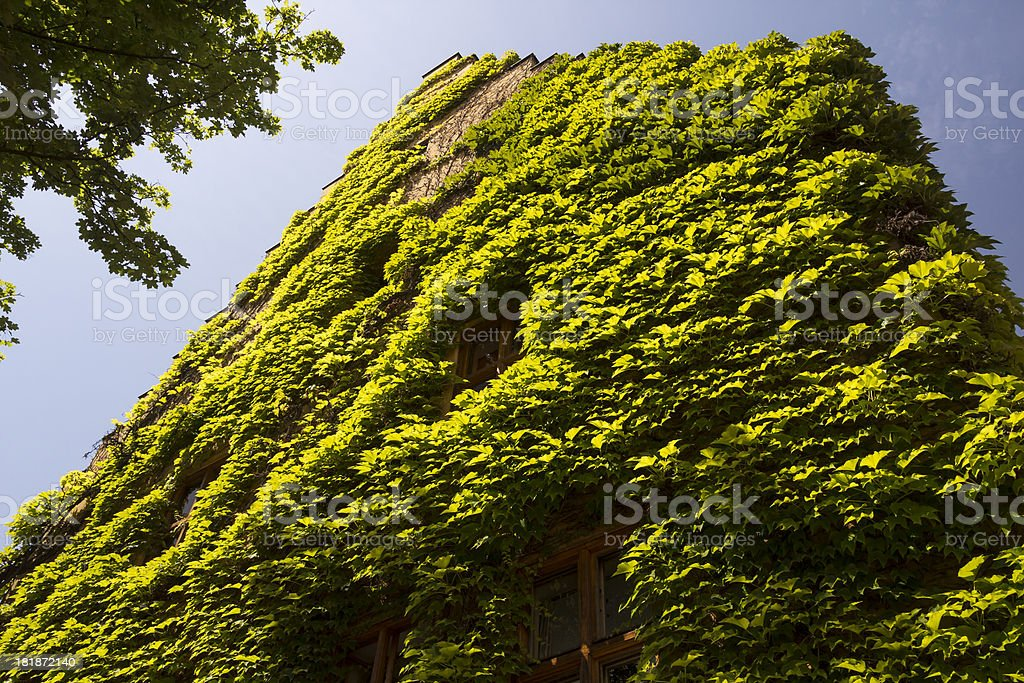 House facade covered by creeping plant royalty-free stock photo