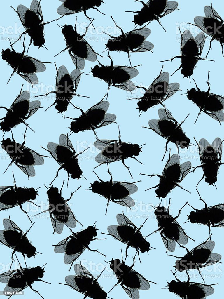 House Fly Background stock photo