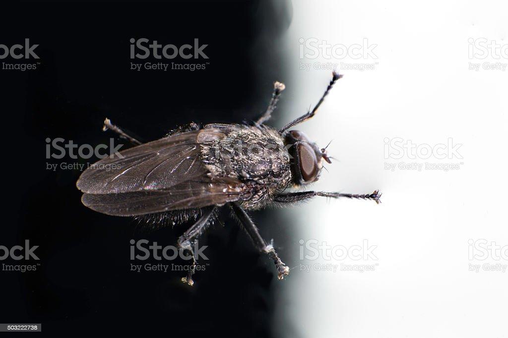 House fly stock photo