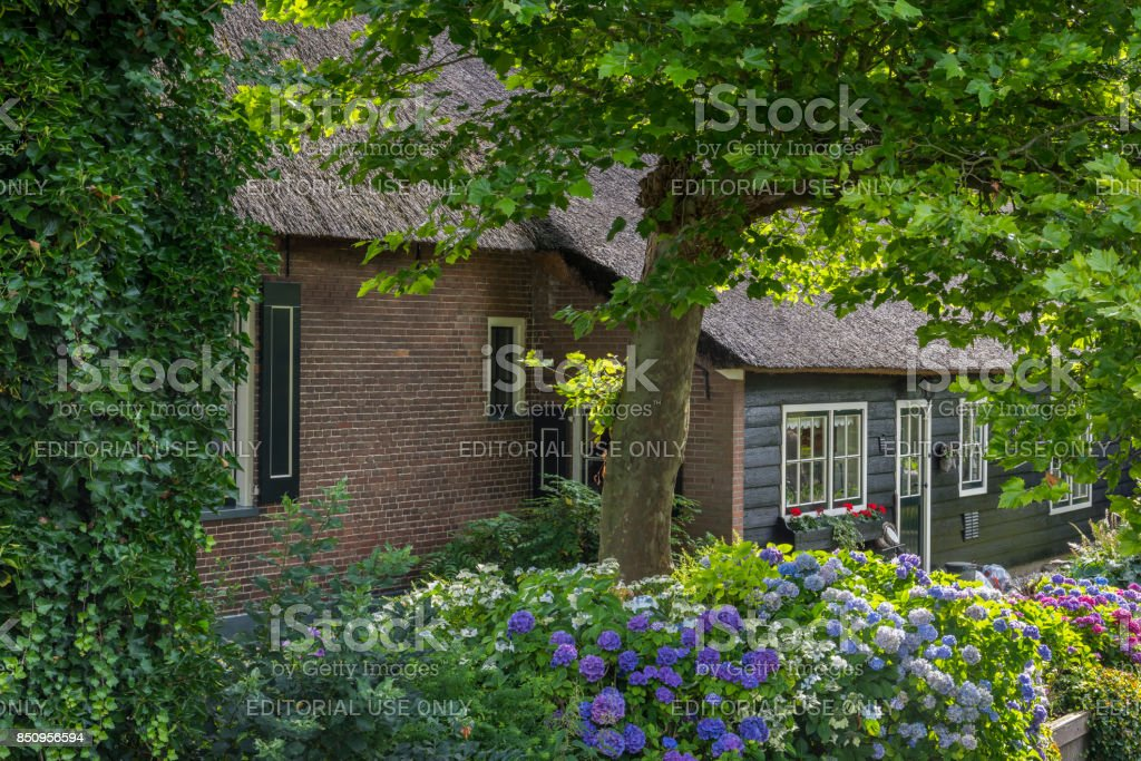 House Hydrangea and Tree in Giethoorn stock photo