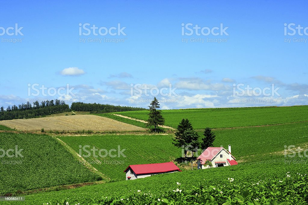 House in a field stock photo