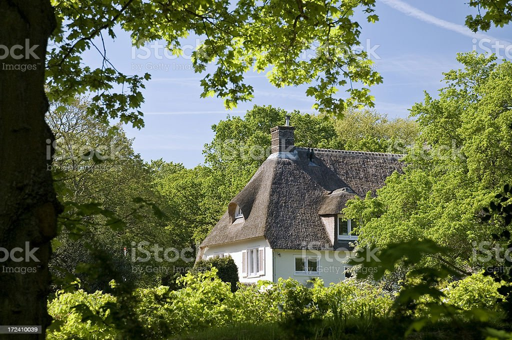 House in a Forest stock photo