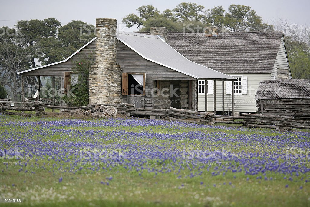 House in bluebonnets stock photo