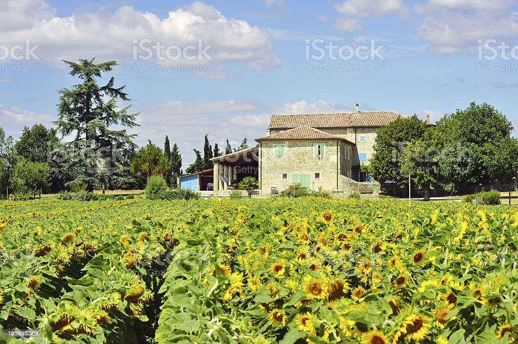 House in Provence with sunflowers stock photo