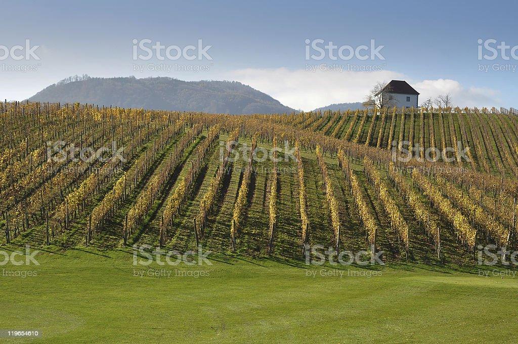House in Vineyards. Škalce, Slovenia royalty-free stock photo
