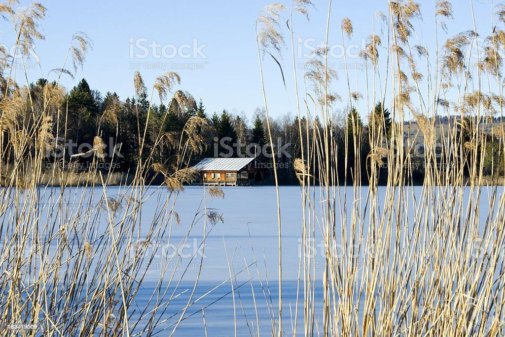 House near frozen lake through reed stock photo