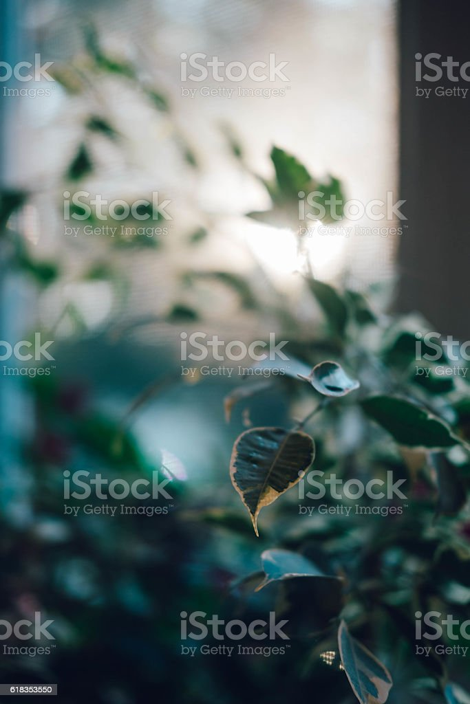 House plant detail with sunlight stock photo