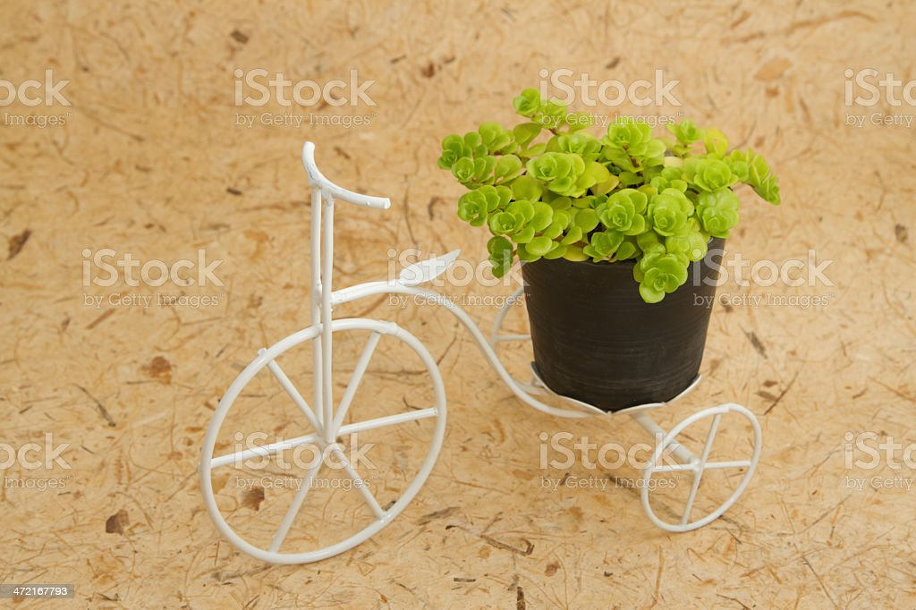 house plant on vintage bicycle for decoration royalty-free stock photo