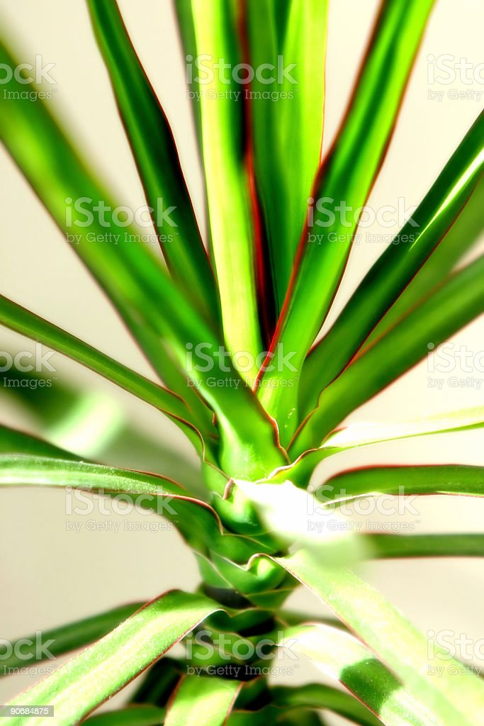 House plant stock photo
