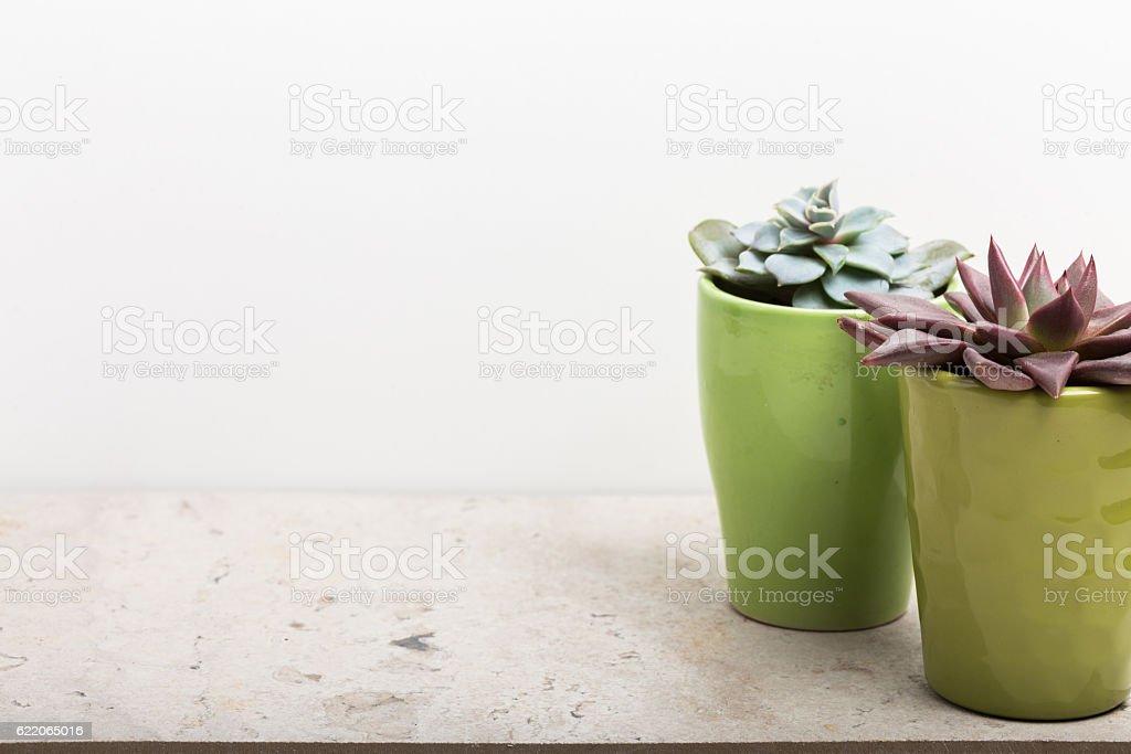 House plants. Succulents stock photo