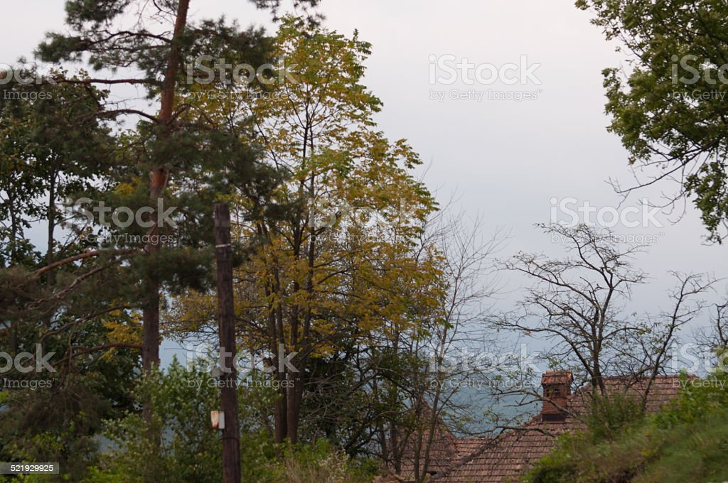 house roof surrounded by trees royalty-free stock photo