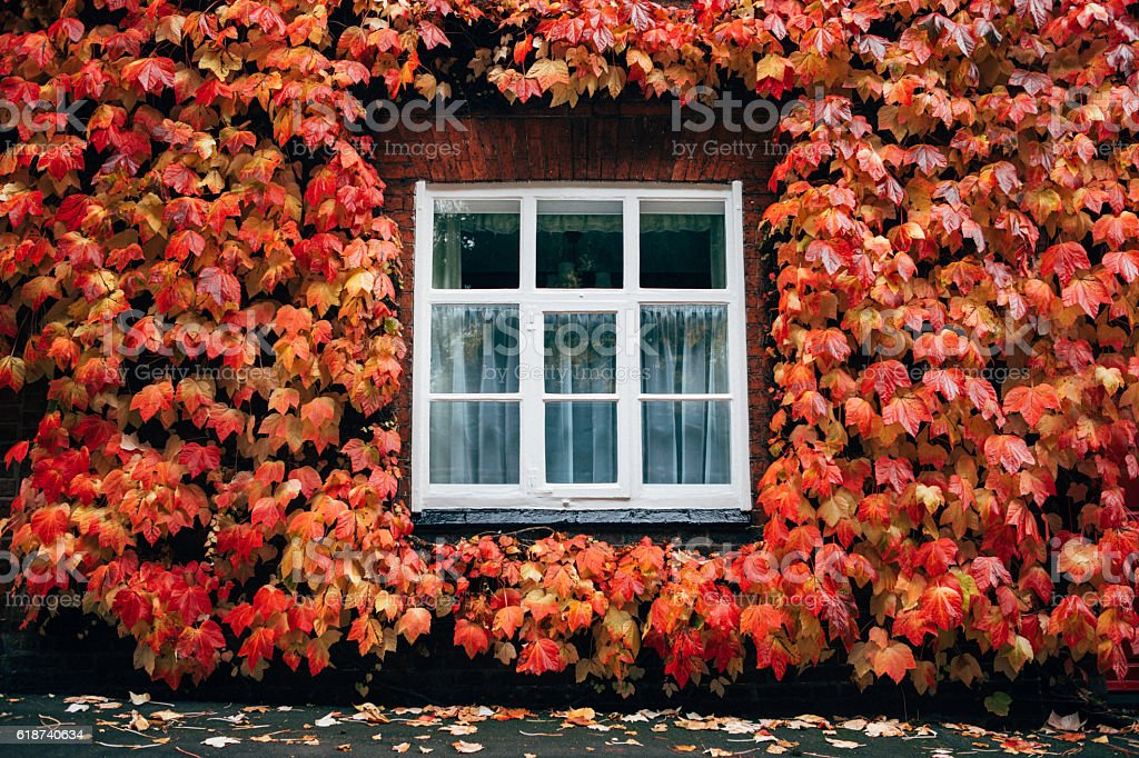 house surround with leafs stock photo