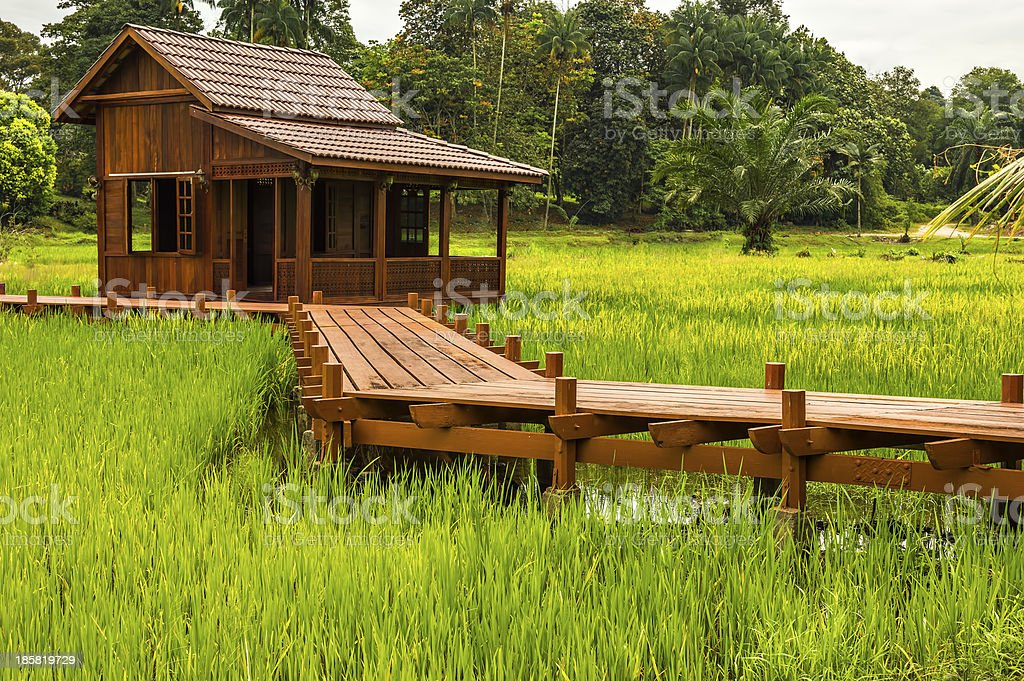 House view with paddy field royalty-free stock photo