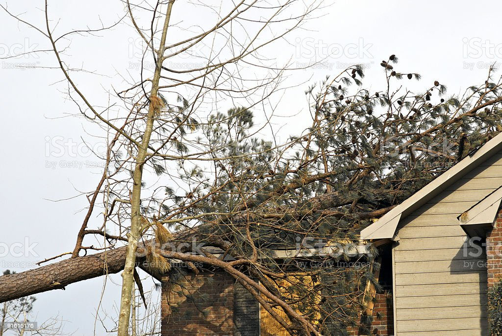 House with pine tree that has fallen on its roof stock photo