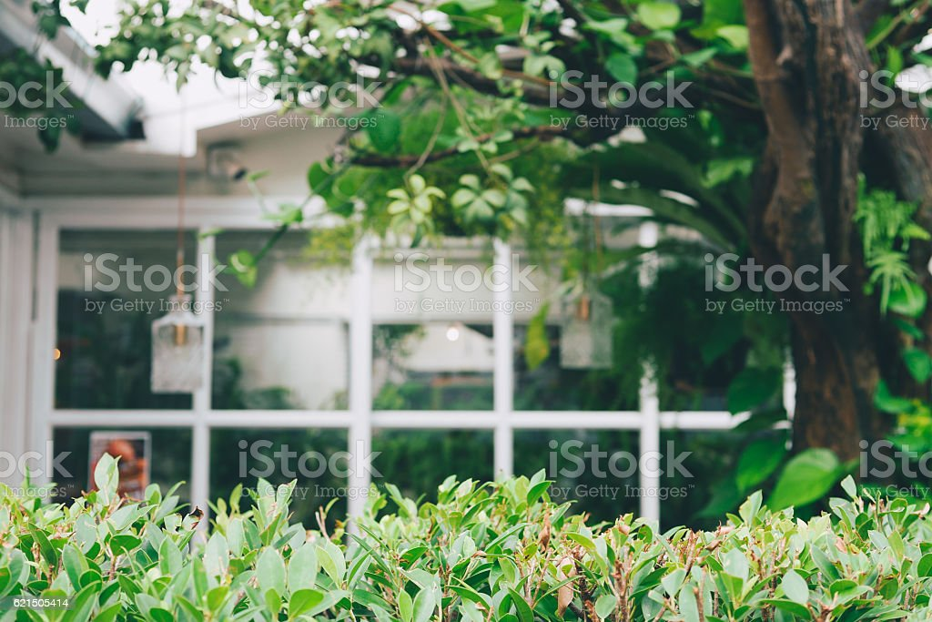 House With Windows Surrounded By Tree. blurred background stock photo