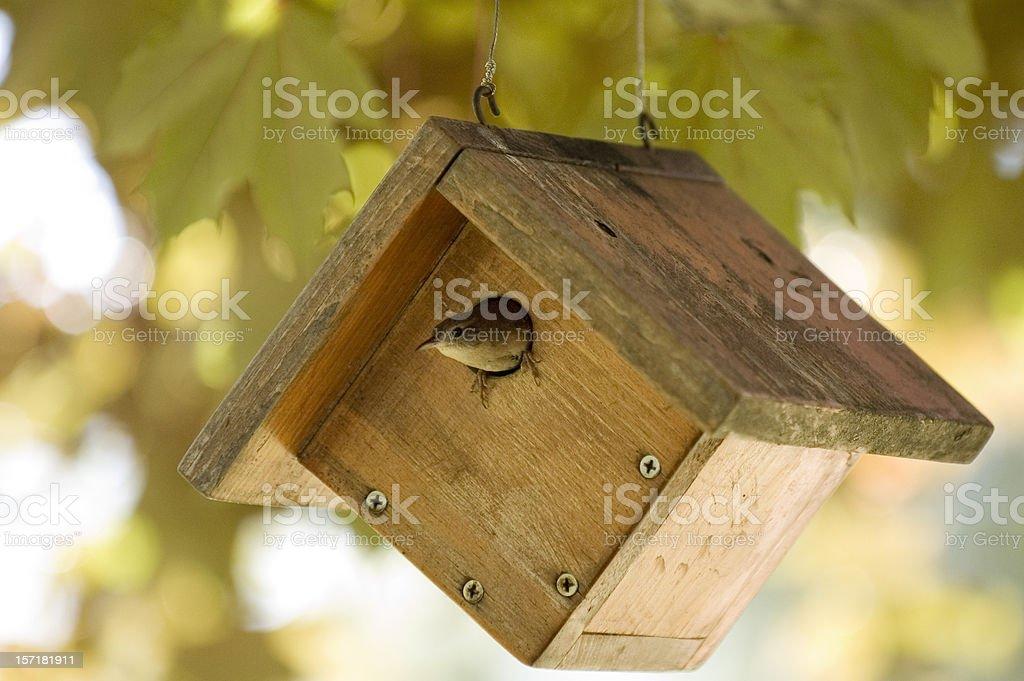 House Wren royalty-free stock photo