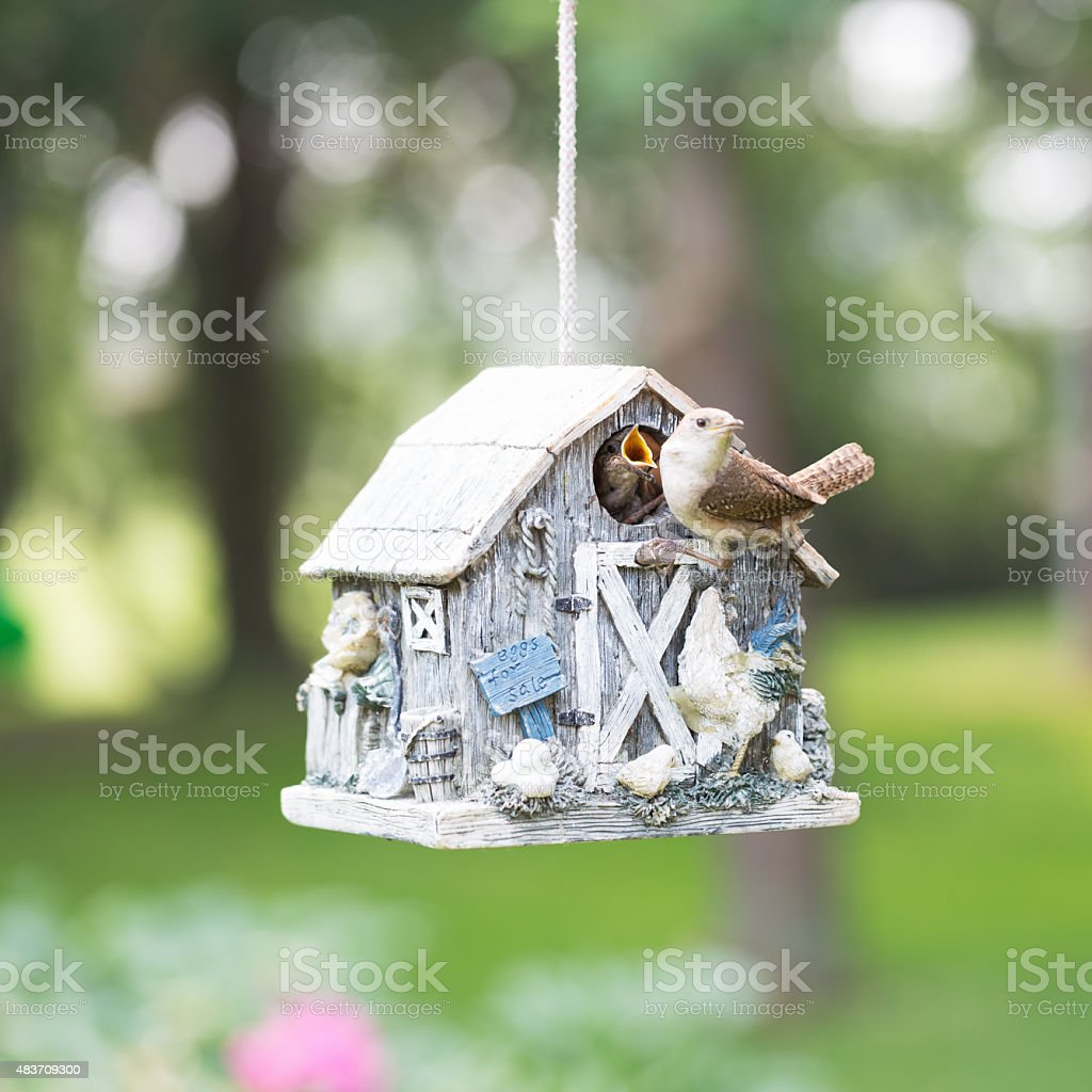 House Wren with Hungry Baby in Birdhouse stock photo