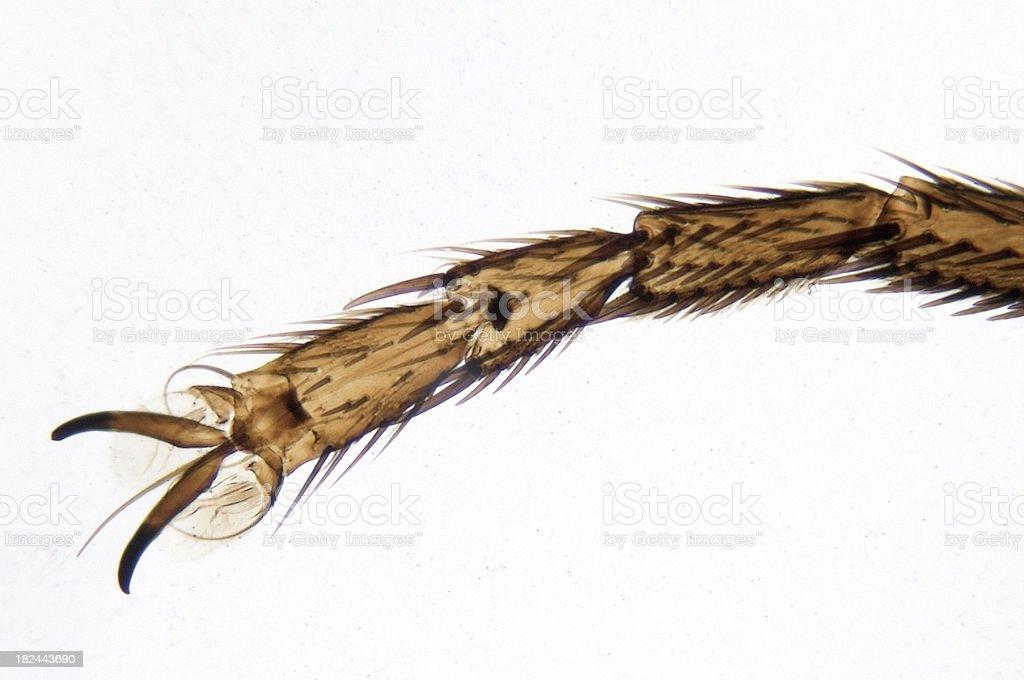 Housefly Leg royalty-free stock photo