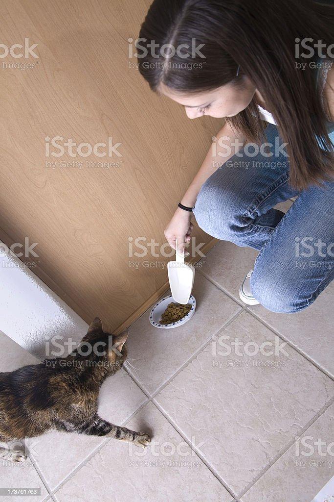 Household Chores - Feeding the Cat royalty-free stock photo