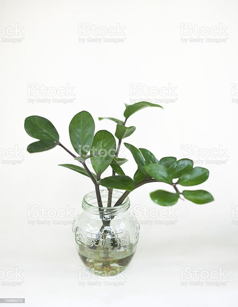 Houseplant royalty-free stock photo