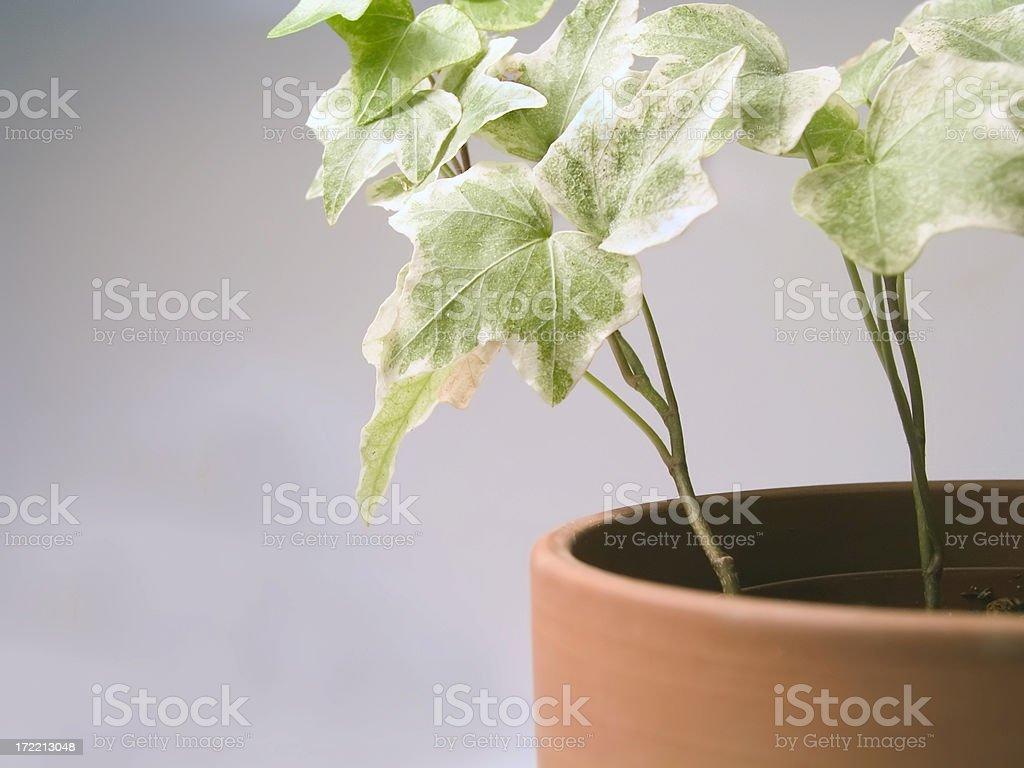 Houseplant stock photo