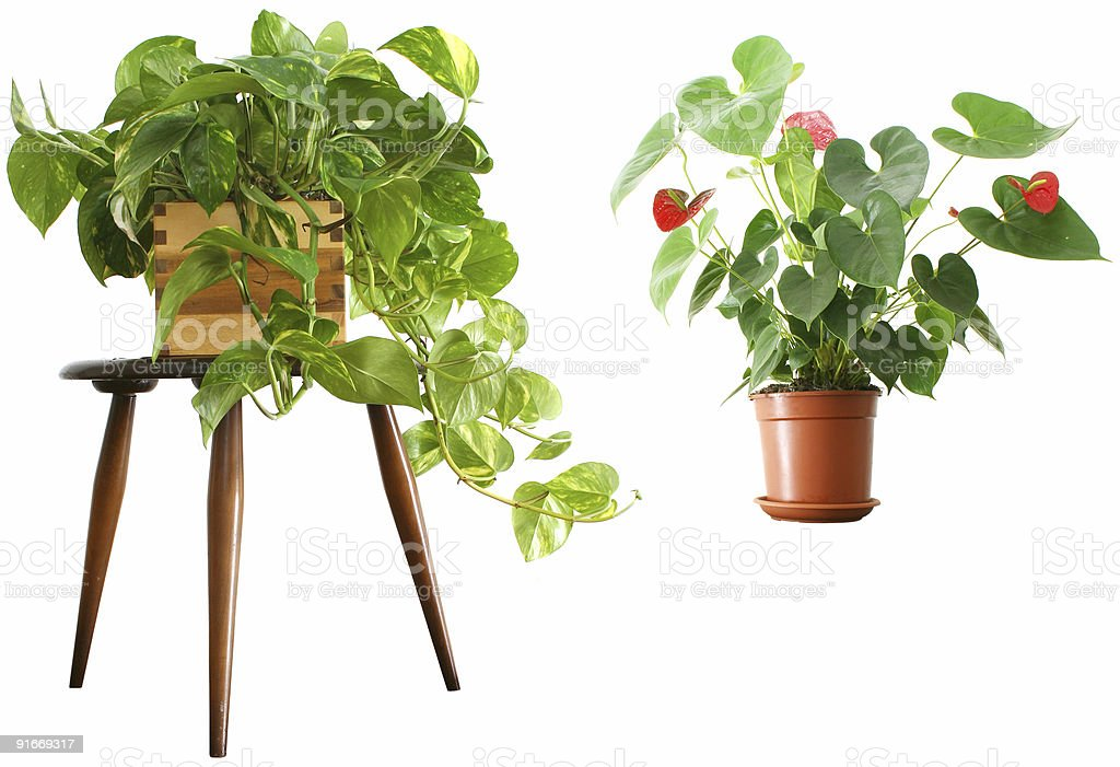 Houseplants 2 for 1 royalty-free stock photo