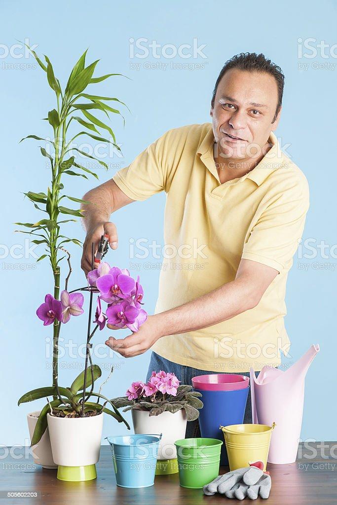 Houseplants Care stock photo