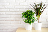 houseplants in pots on a table at a brick wall