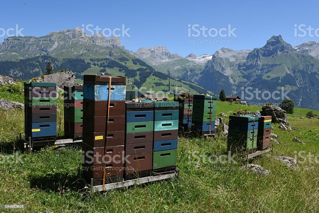 Houses for beekeeping and production of honey over Engelberg stock photo