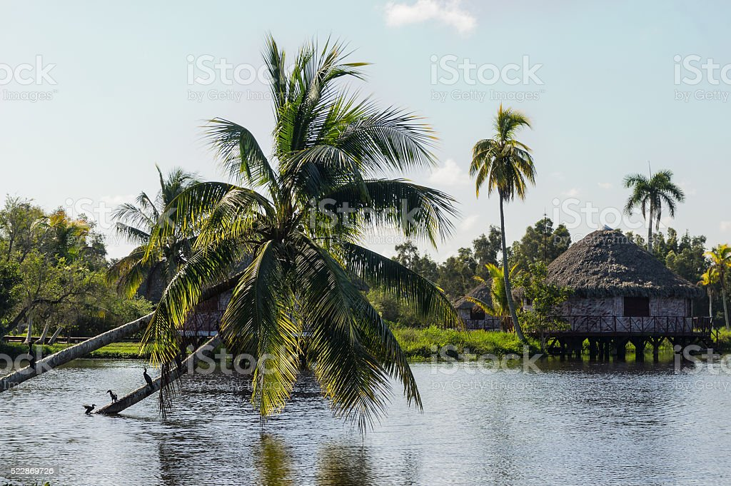 Houses over pillars with palm tree growing from water stock photo