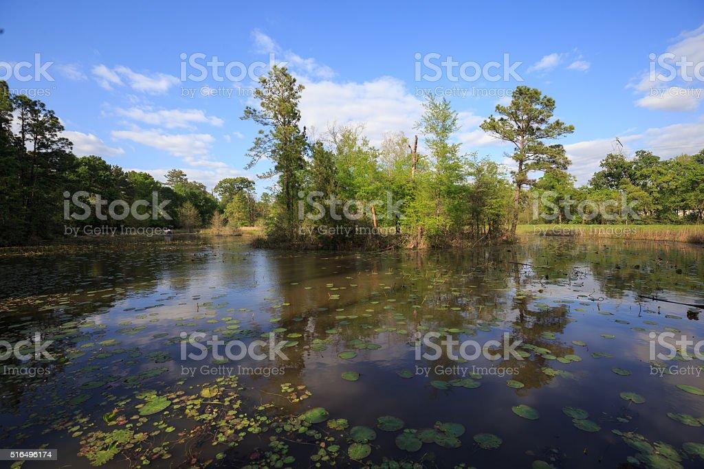 Houston Arboretum Nature Center landscape view royalty-free stock photo
