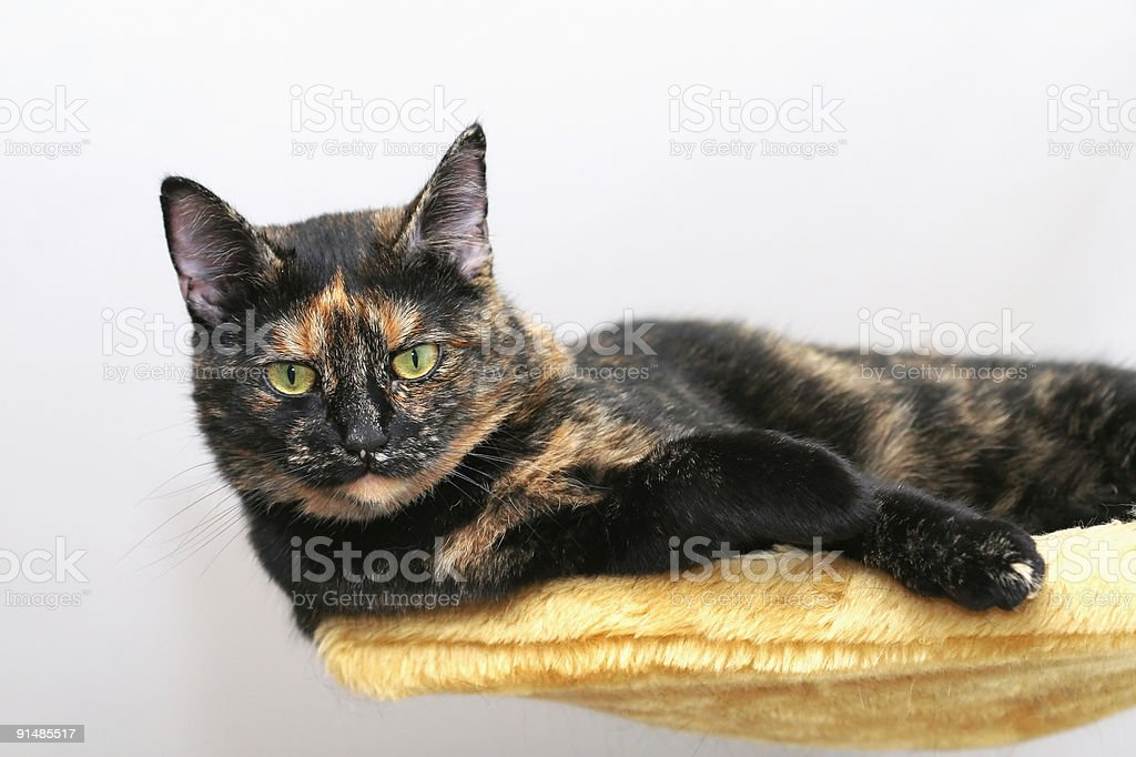 Hovering Cat royalty-free stock photo