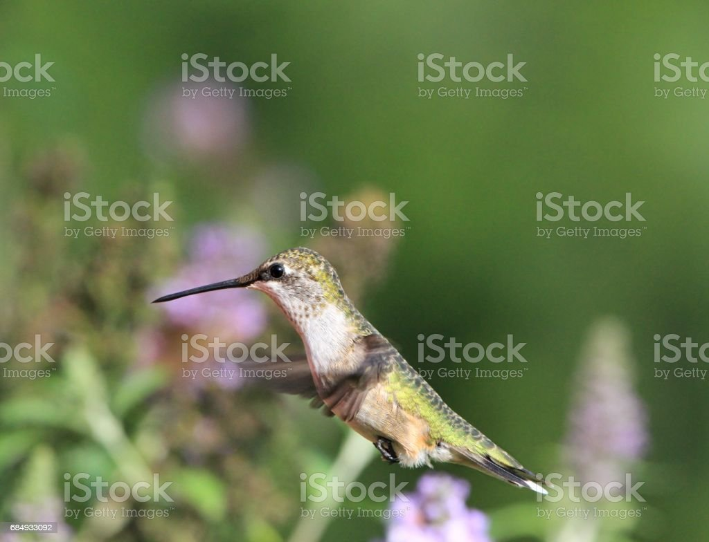 Hovering stock photo
