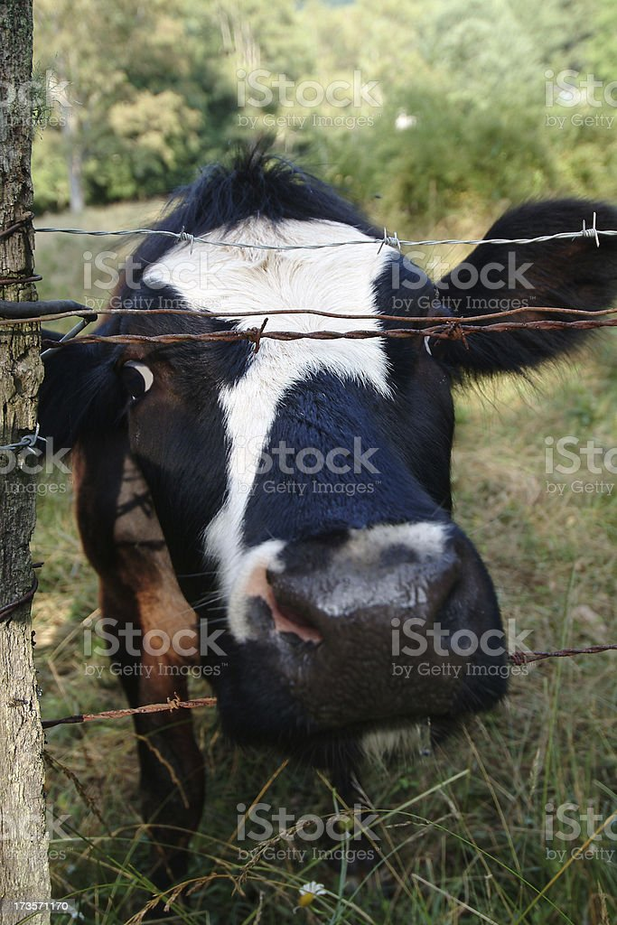 How 'bout a little smooch? royalty-free stock photo