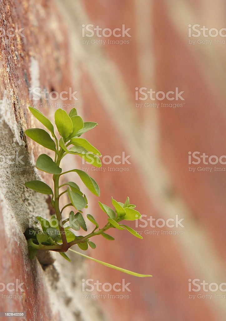 How is it Growing royalty-free stock photo