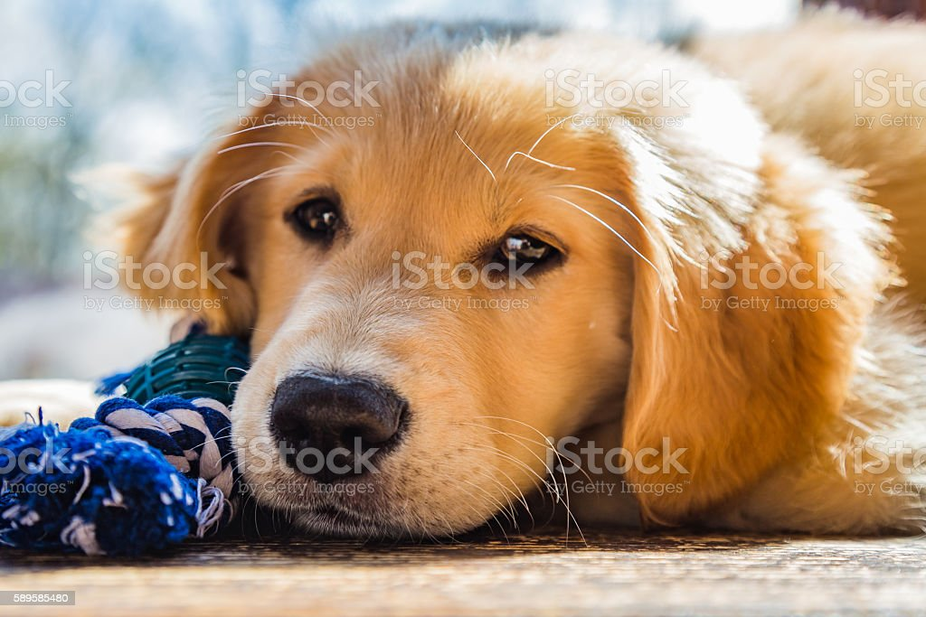 How much is that puppy in the window. stock photo