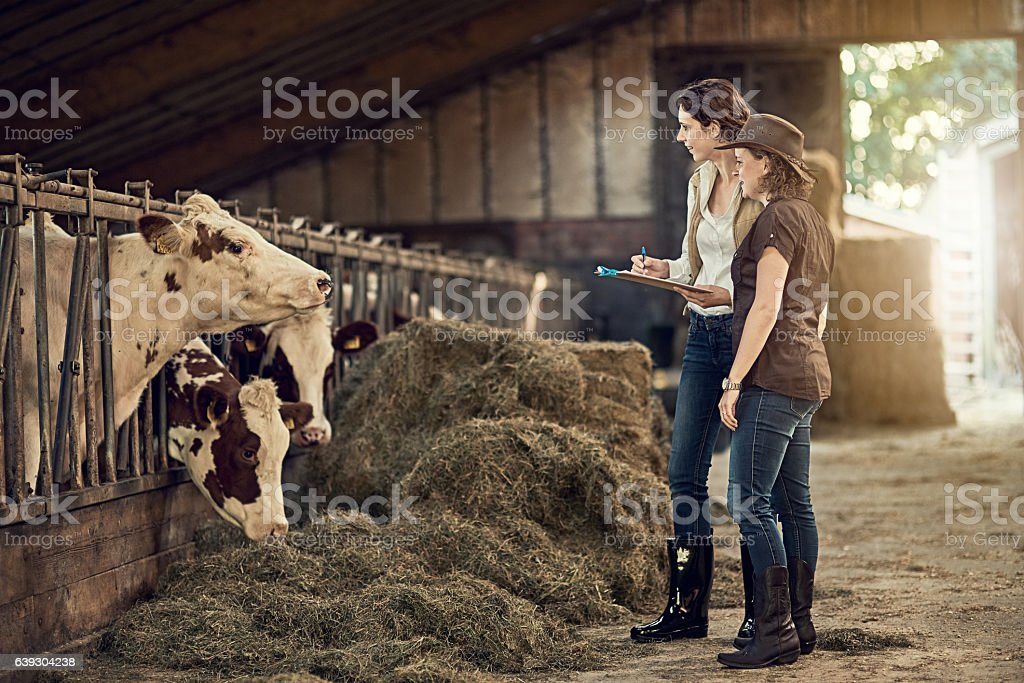 How would you rate the quality of your hay today? stock photo