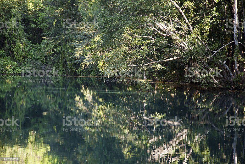 Howard Springs, Darwin, Northern Territory, Tropical Vegetation, Australia royalty-free stock photo