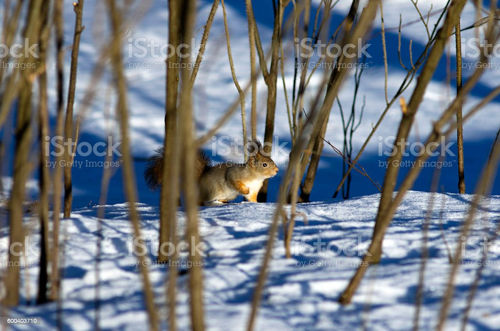 However, the winter has come... stock photo