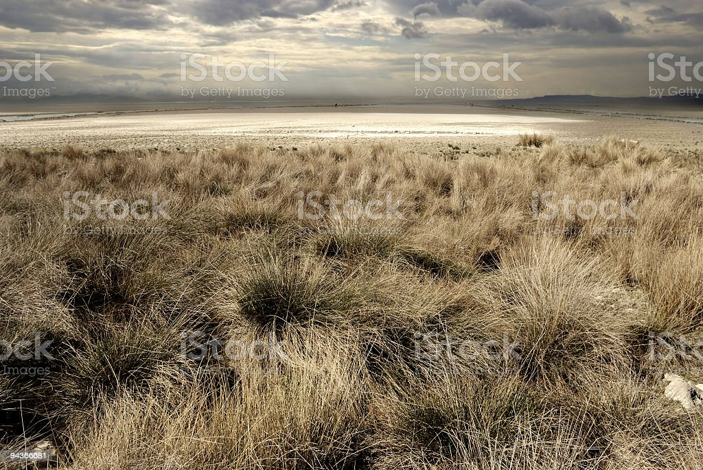 Howling Wilderness of Steppe royalty-free stock photo