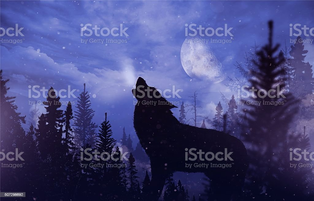 Howling Wolf in Wilderness stock photo