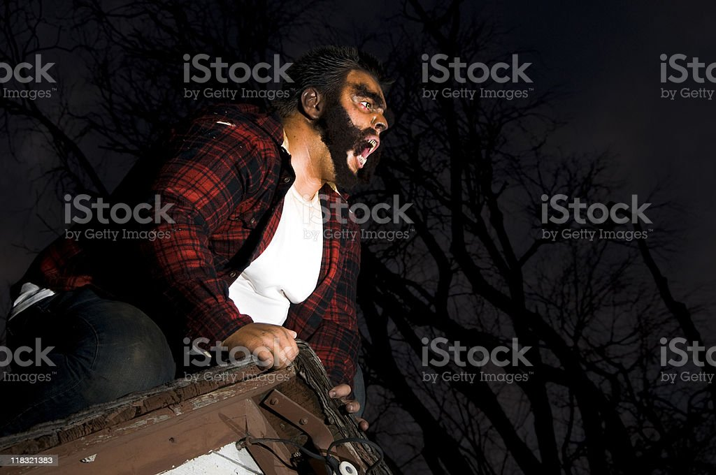 howling wolfman stock photo