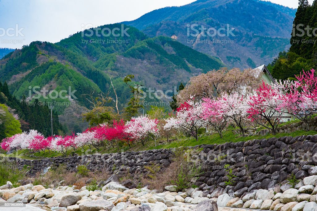 Hua peach and mountains stock photo