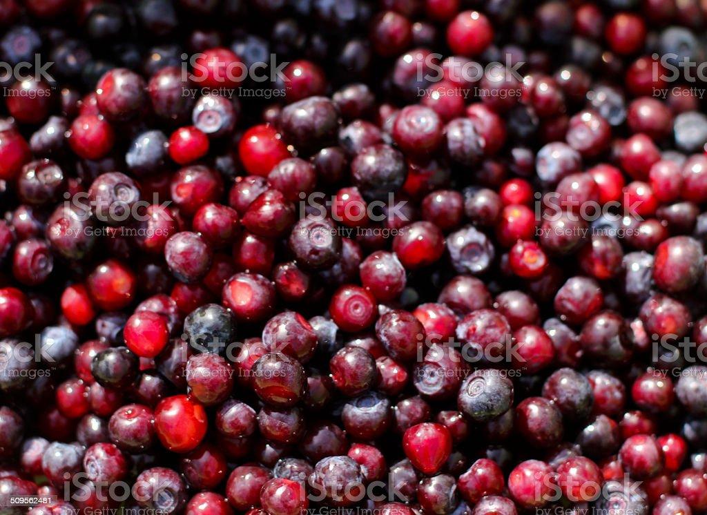 Huckleberries In Sunshine stock photo