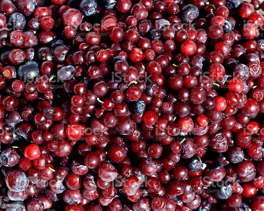 Huckleberries stock photo