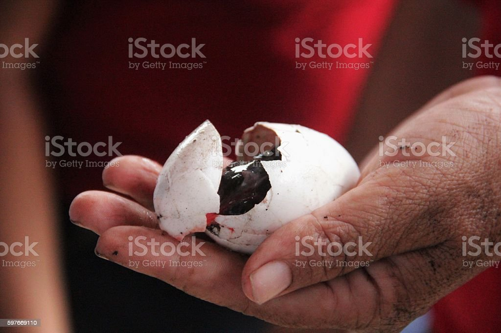 Huevo de cocodrilo stock photo